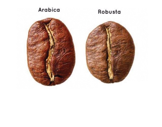 LA DIFFERENZA TRA ARABICA E ROBUSTA